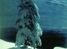 Ի. Շիշկին, Վայրի հյուսիսում, 1891թ.