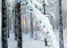 Կ. Կրիժիցկի, Անտառը ձմռանը, 1908-1914թթ.